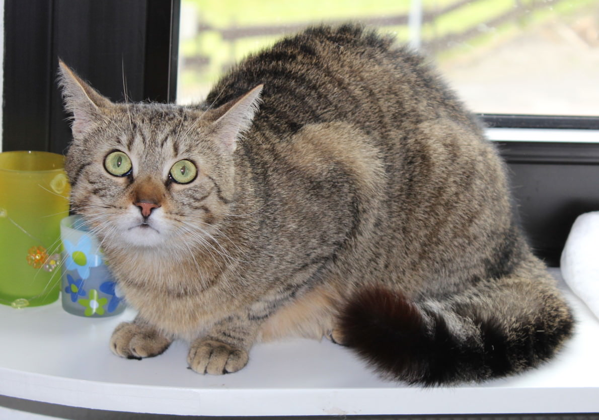 _the3cats_2013_05_30_8133