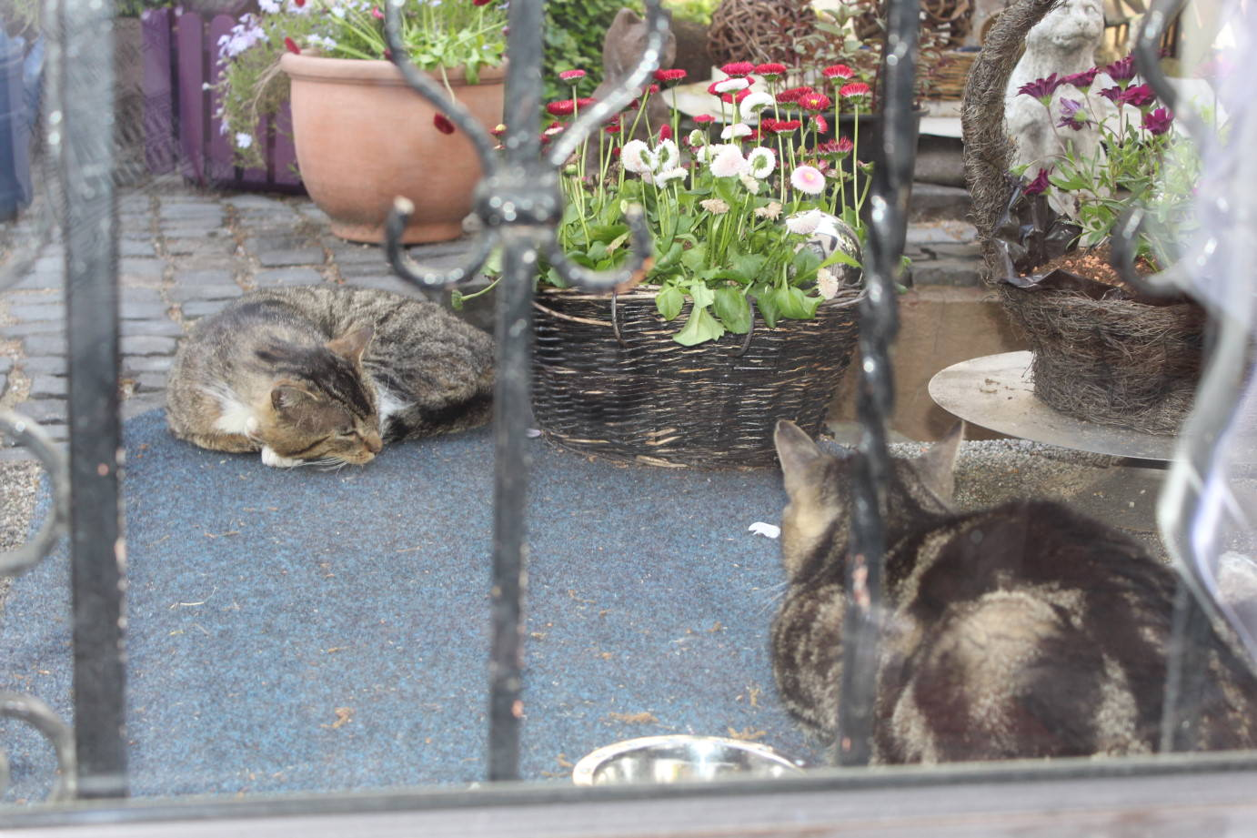 _the3cats_2013_06_02_8380