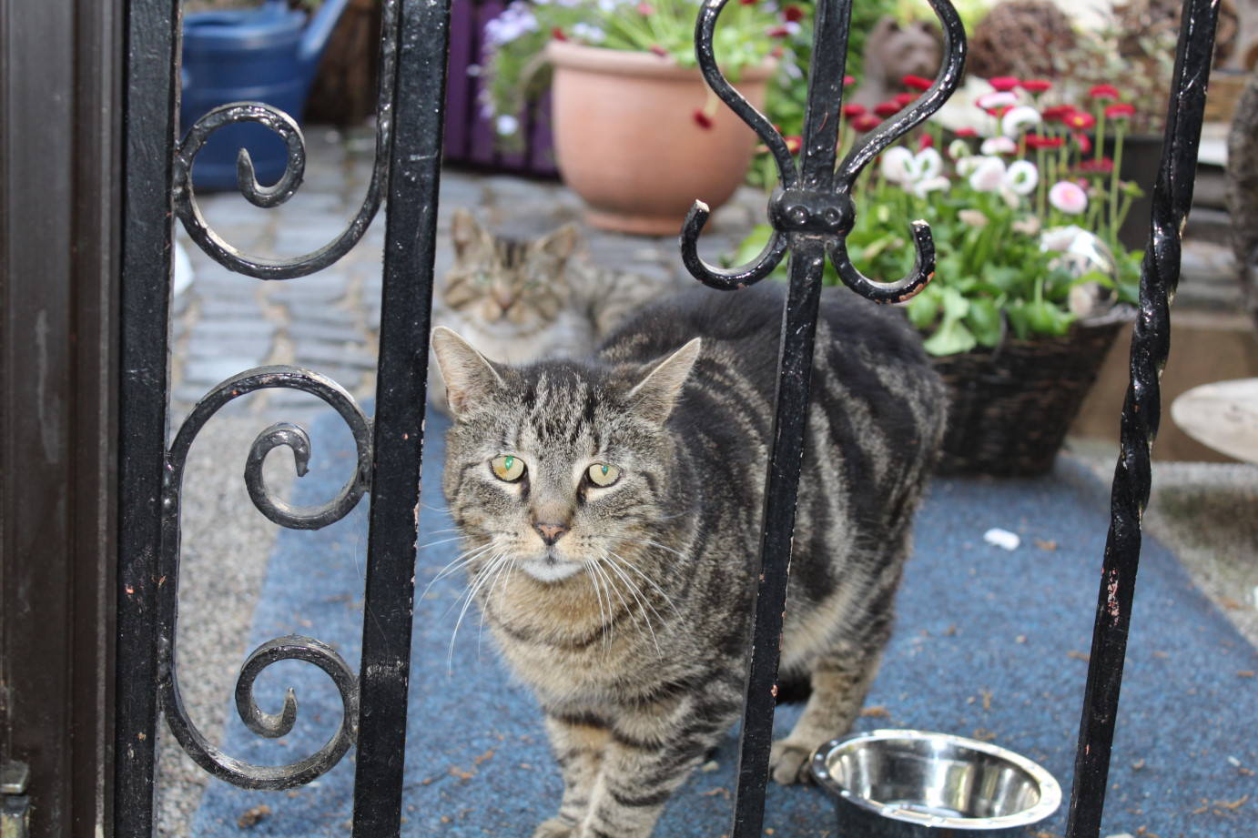 _the3cats_2013_06_02_8382
