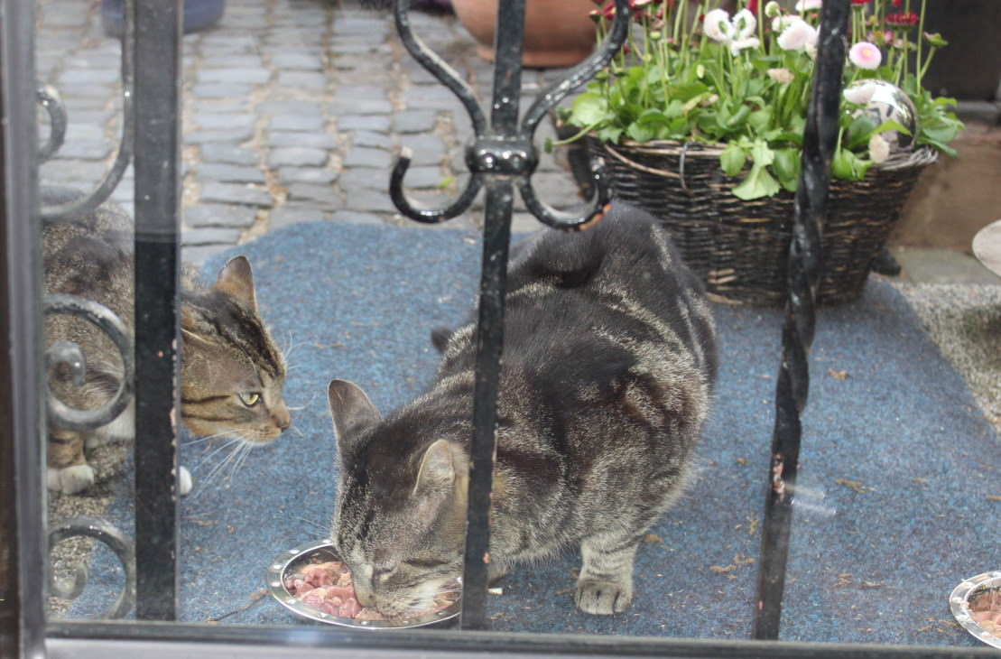 _the3cats_2013_06_02_8388
