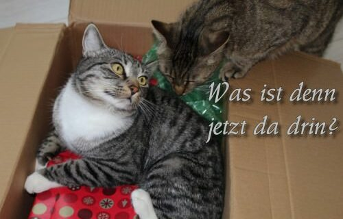 _the3cats_2013_06_06_8860