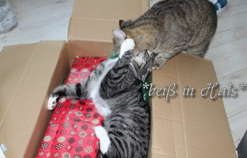 _the3cats_2013_06_06_8863