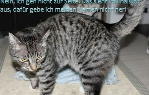 "Linus: Recycling for Cats: Das ""T-Shirt-Kühlzelt"""
