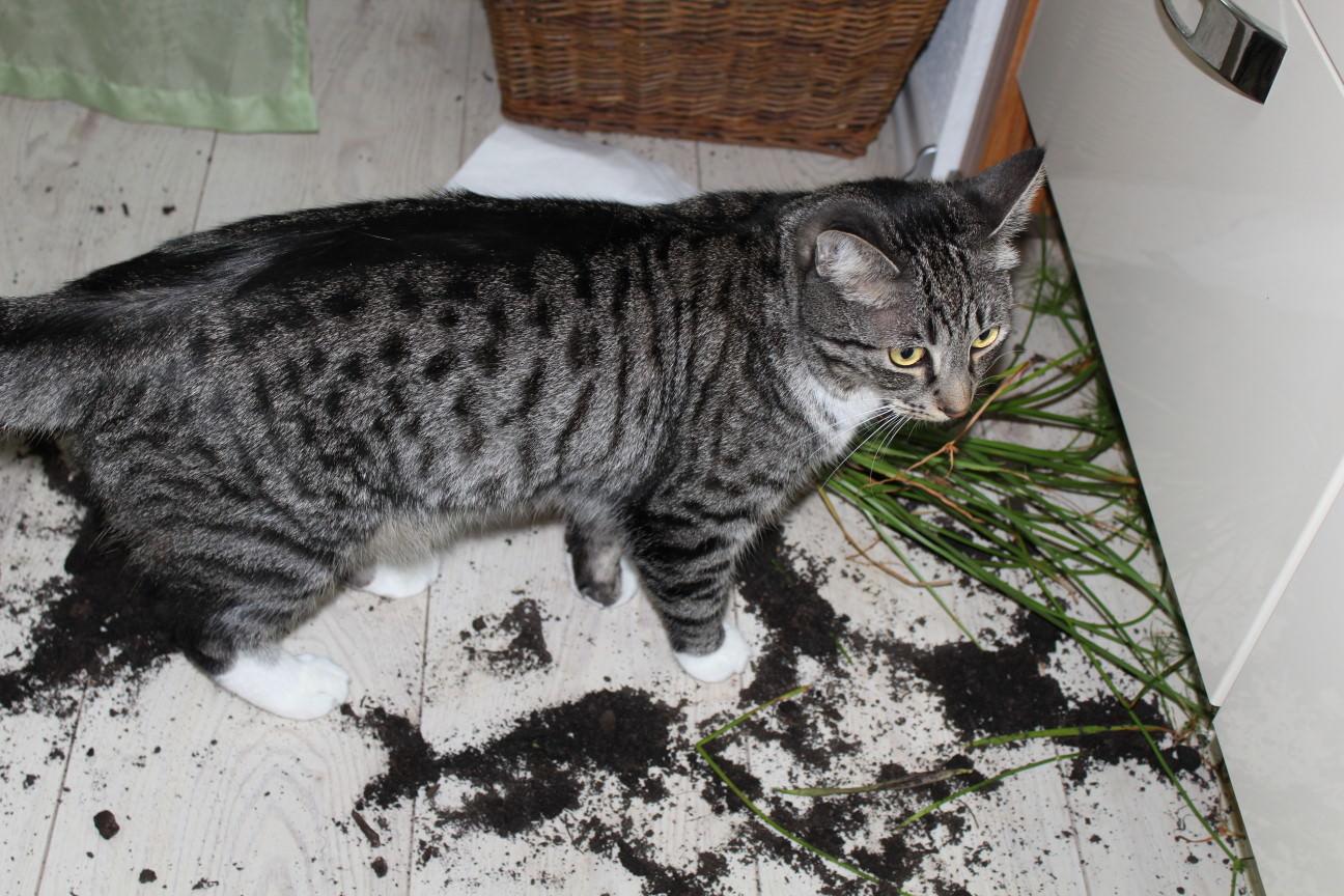Linus: Graslandschaften
