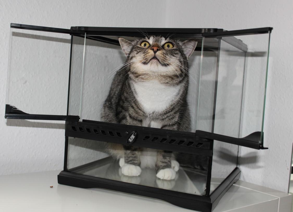 Linus: Wer im Glaskasten sitzt…