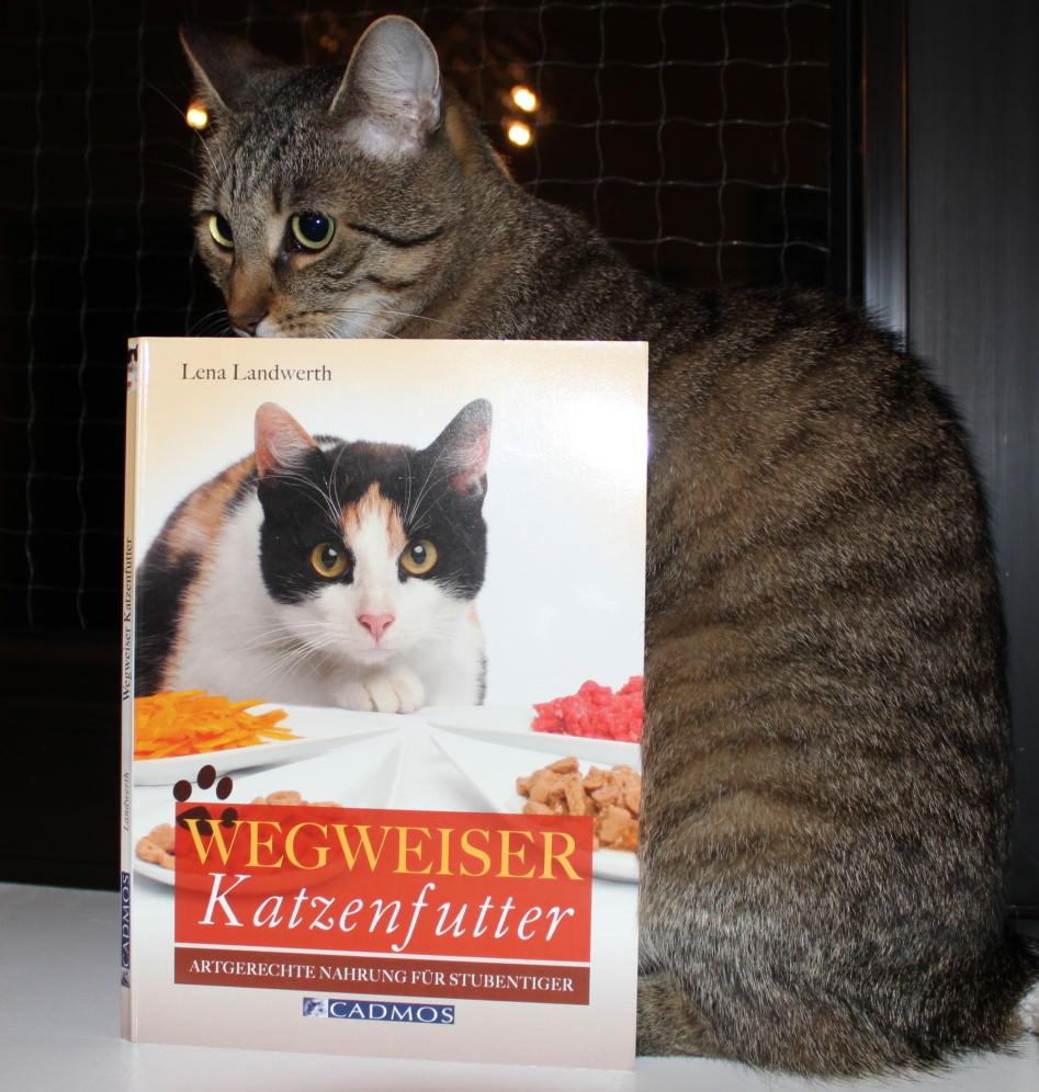 """LiJaLu: Buchrezension """"Wegweiser Katzenfutter"""" von Lena Landwerth"""