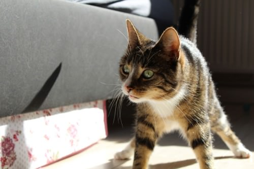 _the3cats_2013_09_30_3560