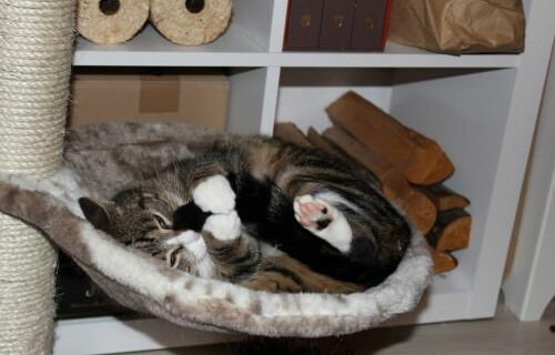 the3cats_2013_11_12_0188