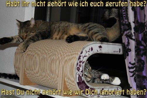 _the3cats_2013_10_25_8064
