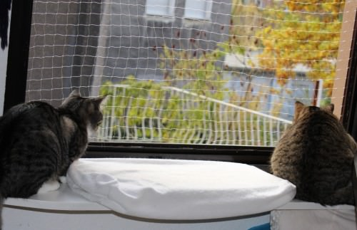 _the3cats_2013_12_02_3224
