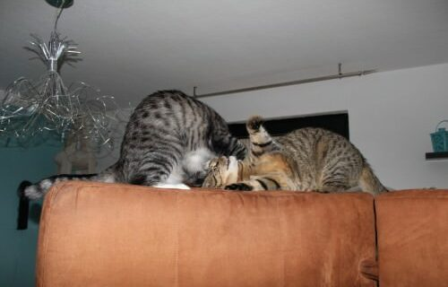 _the3cats_2013_12_24_6638