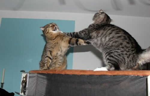 _the3cats_2013_12_24_6661
