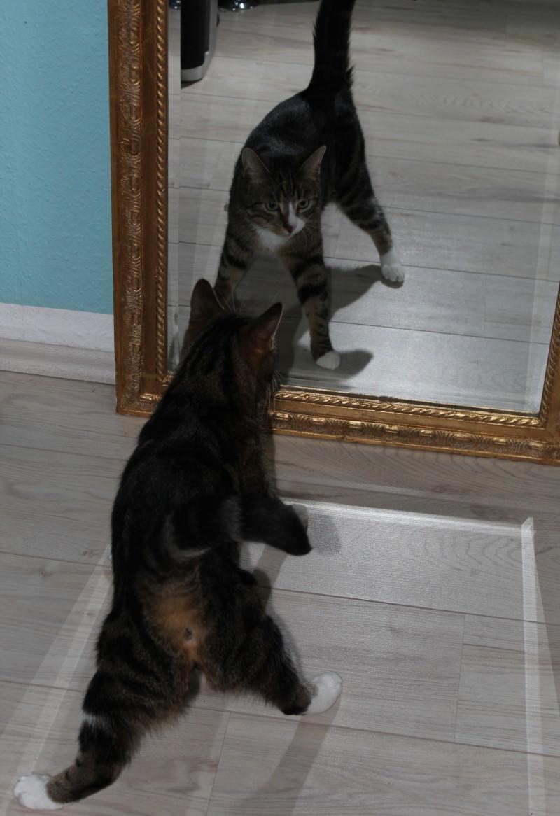 Jinpa: Epilepsie bei Katzen