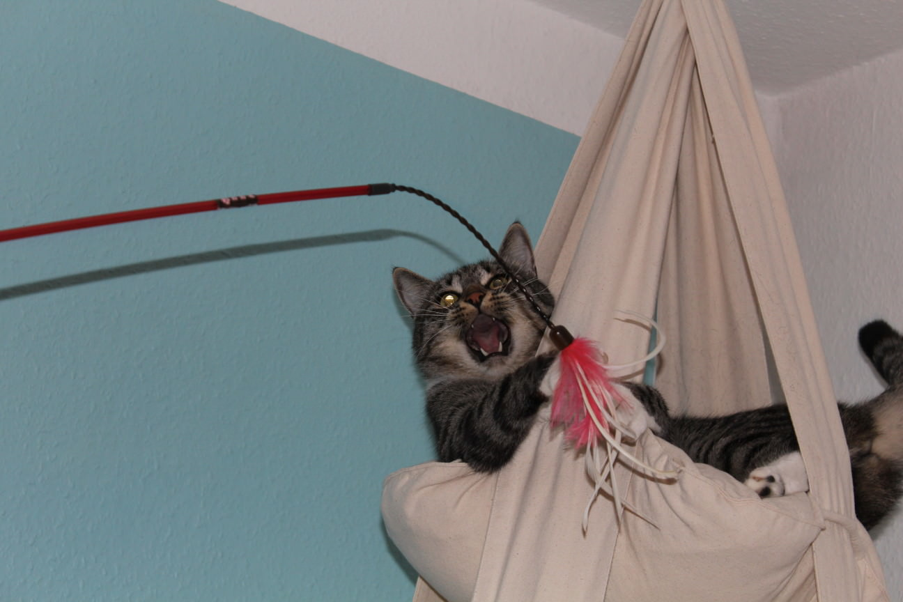 Linus: Cat's Trapeze Revival