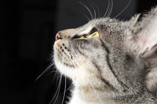 _the3cats_2014_01_18_9266