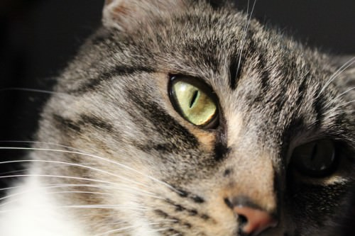 _the3cats_2014_01_18_9273