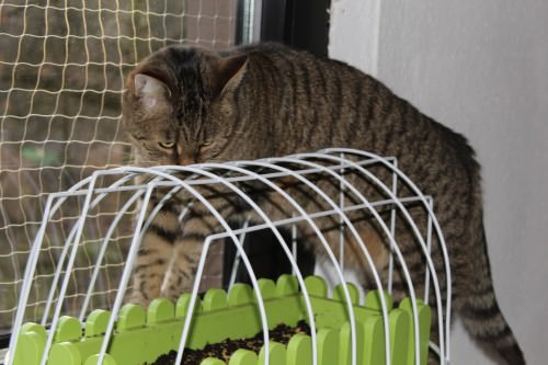 _the3cats_2014_01_18_9574