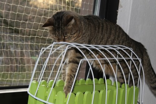 _the3cats_2014_01_18_9577