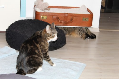 _the3cats_2014_01_23_9748