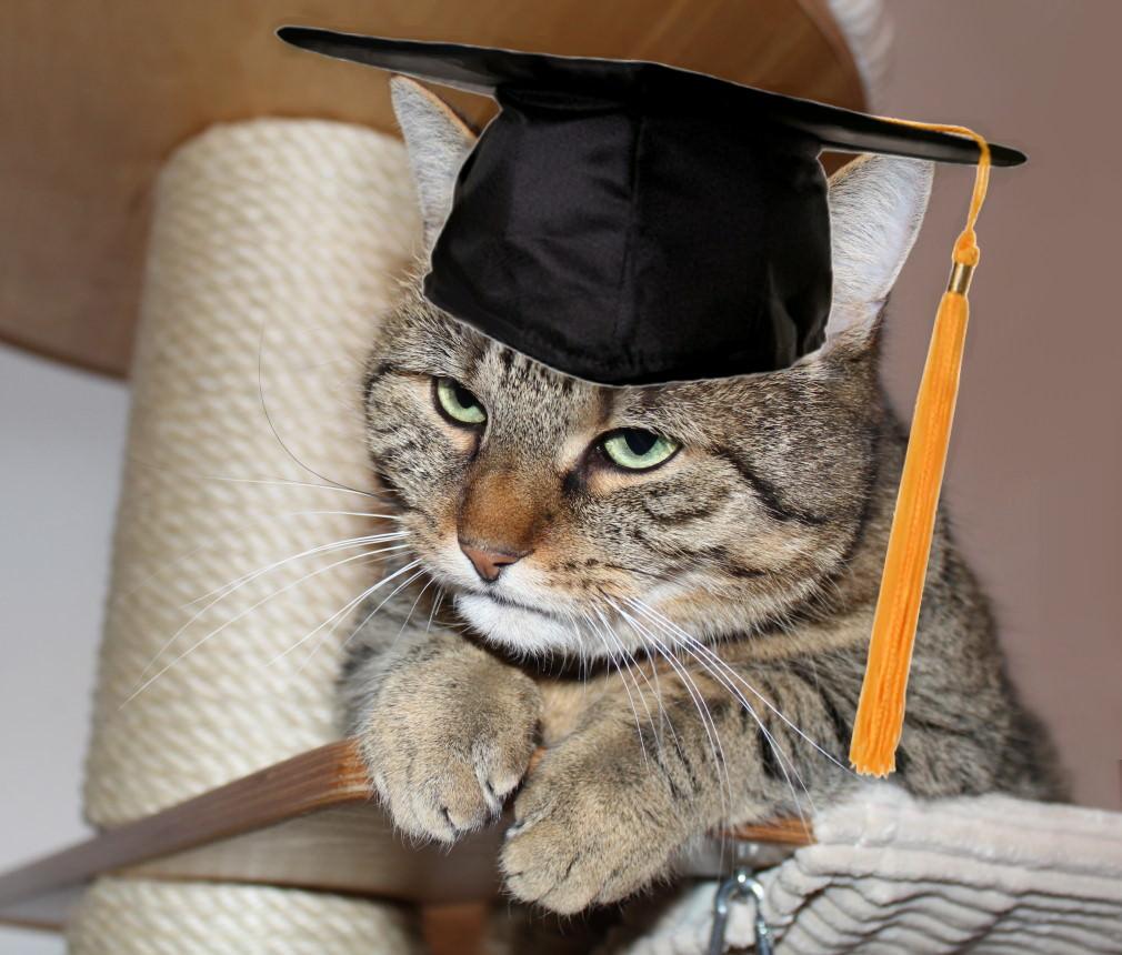 Jasper: Katzenernährung