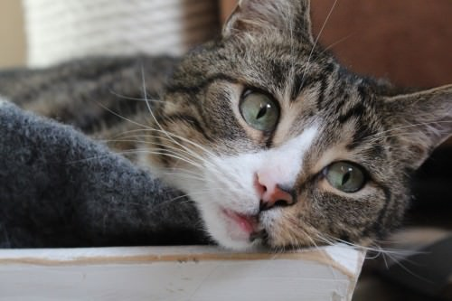_the3cats_2014_02_02_0196