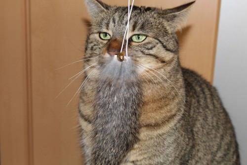 _the3cats_2014_02_03_0664