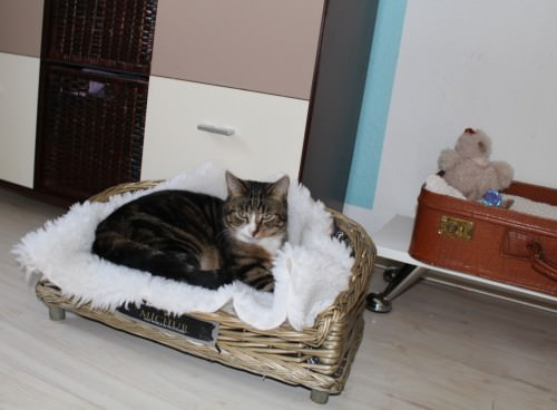 _the3cats_2014_02_03_0729