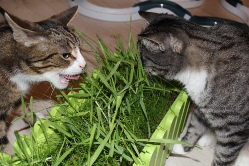 _the3cats_2014_02_07_0878