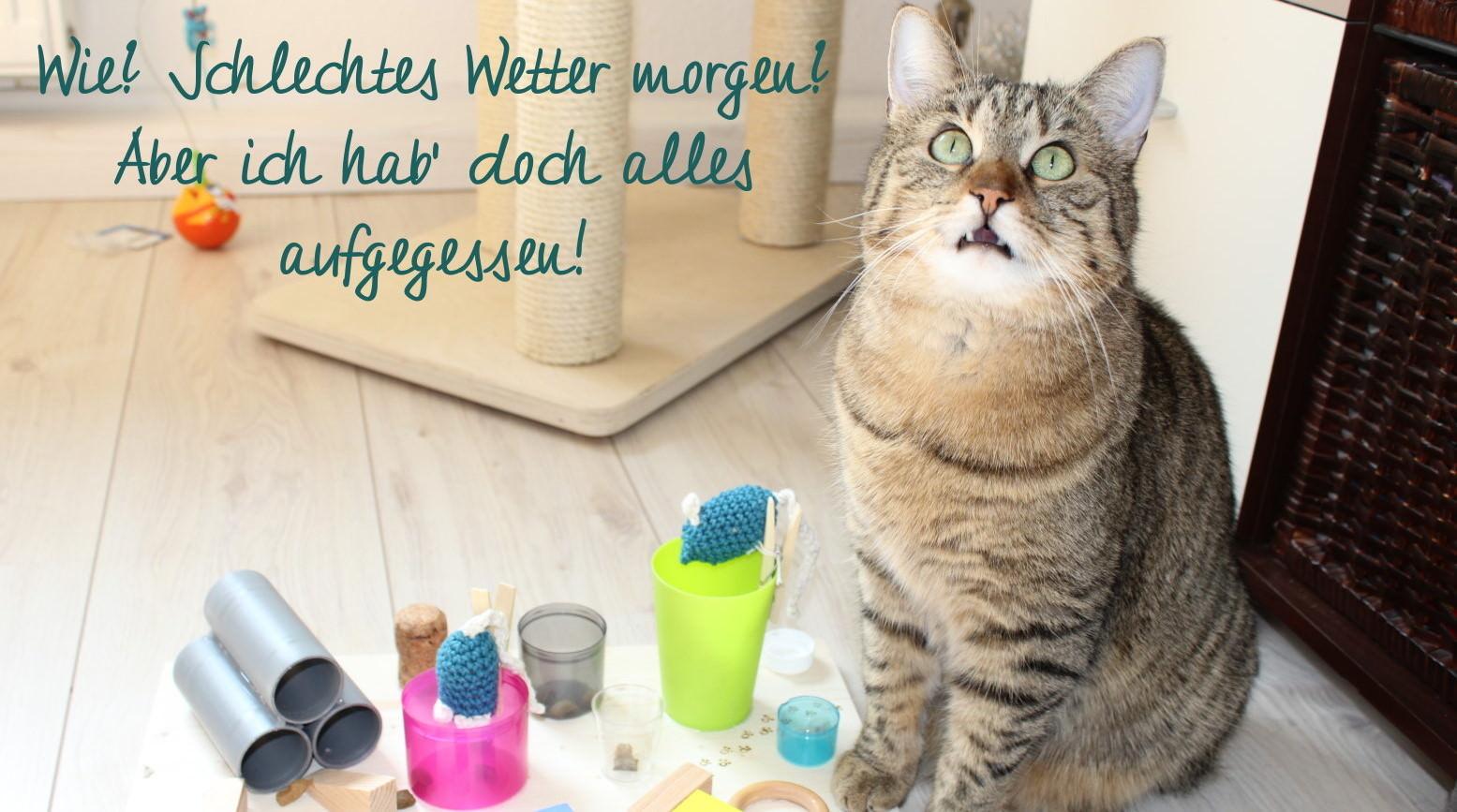Jasper: Der Katzennetzwerkshopfummelbrett-Deal