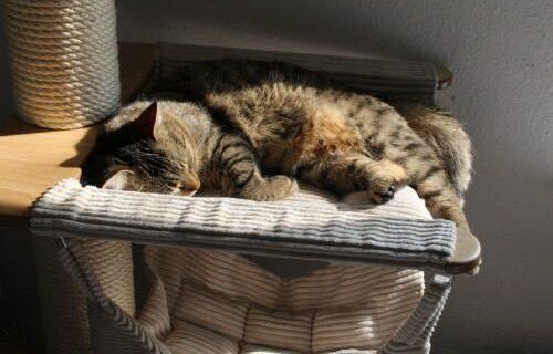 LiJaLuJi: Die 10 häufigsten Gründe für Tierarztbesuche in 2013 [VPI – Veterinary Pet Insurance]