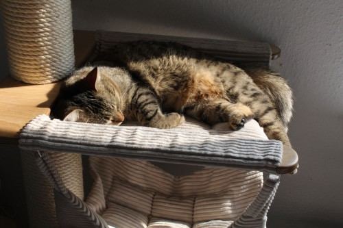 _the3cats_2014_04_01_2739