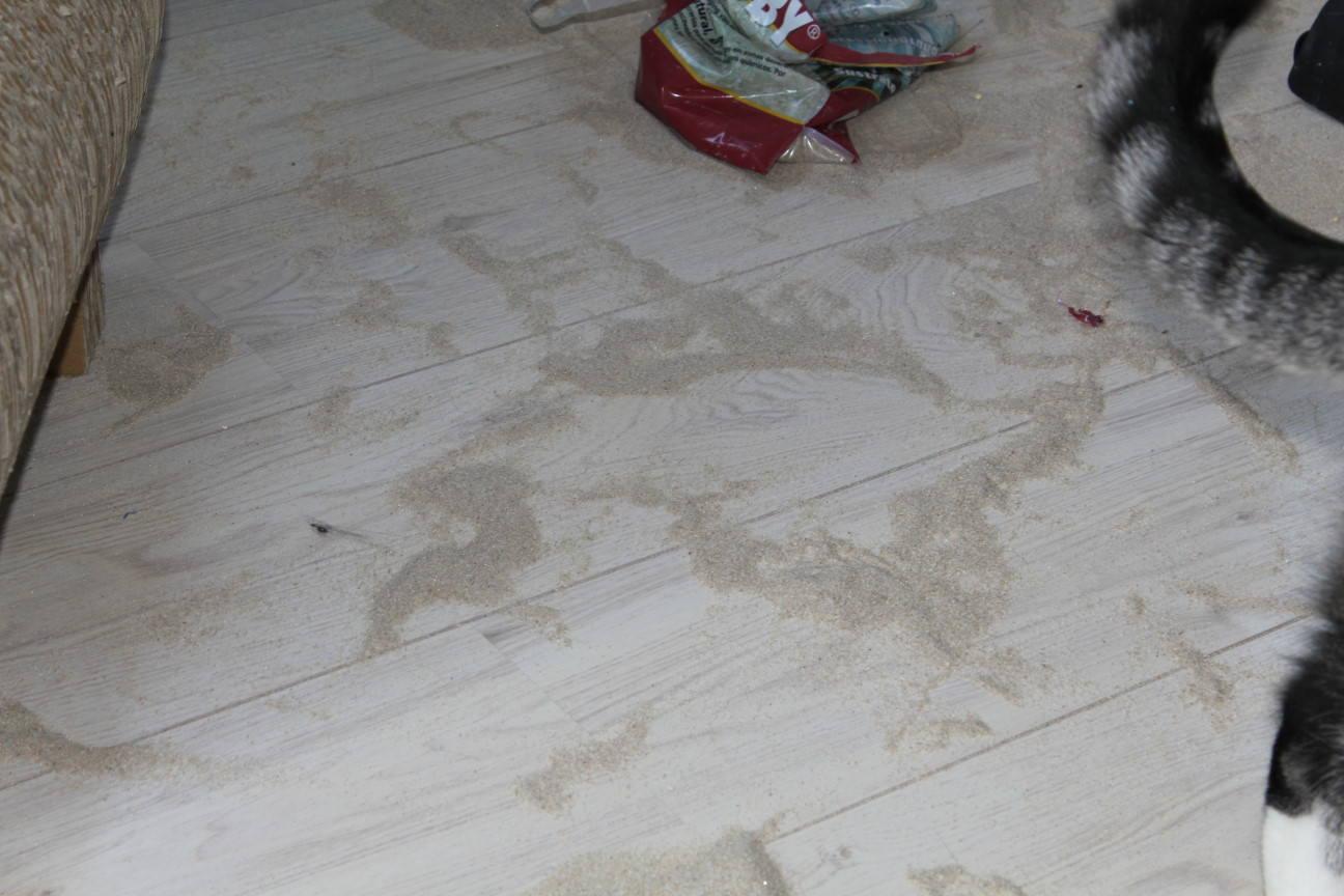 Jasper & Linus: Wer seine Katze liebt, der gibt ihr … Sand