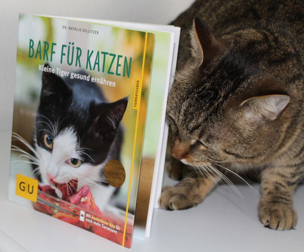 """Jasper: Ich habe Hunger, Hunger, Hunger… habe… [Buchrezension """"BARF für Katzen"""" von Dr. Natalie Dillitzer]"""