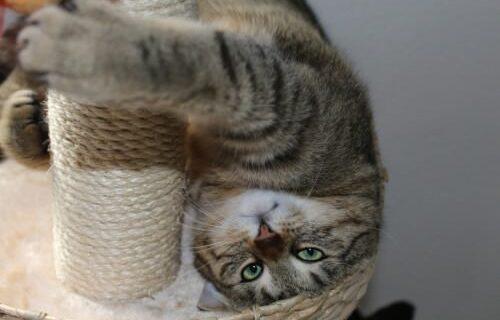 the3cats: 2. Bloggeburtstag – und wir stehen Kopf