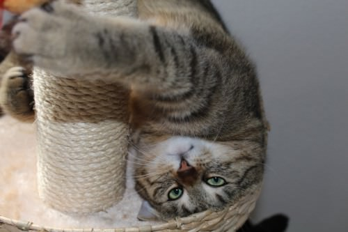 _the3cats_2014_05_11_5319