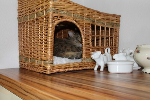 _the3cats_2014_06_28_8689