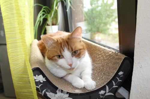 _the3cats_2014_06_28_8692