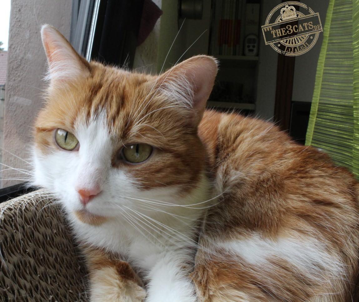 Lucy: Das große Haustier-Notfall-Steckbrief-Makeover
