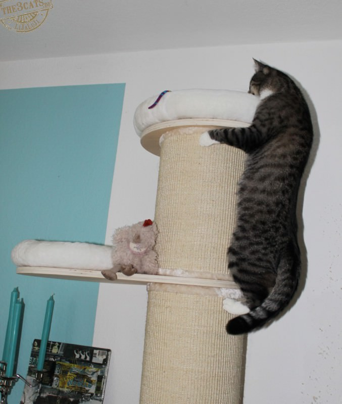 _the3cats_2014_08_17_0401