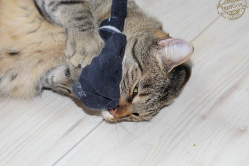 _the3cats_2014_09_07_2255