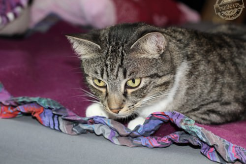 _the3cats_2014_09_07_2266