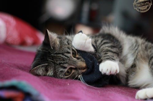 _the3cats_2014_09_07_2381