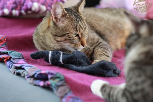 _the3cats_2014_09_07_2852