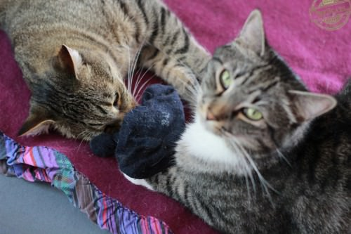 _the3cats_2014_09_07_2885