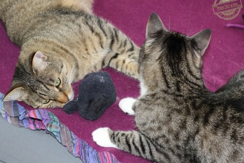 _the3cats_2014_09_07_2927
