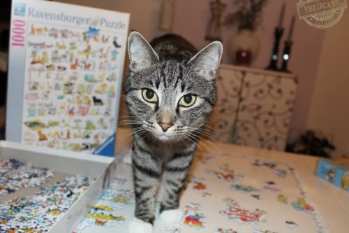 _the3cats_2014_11_13_6160