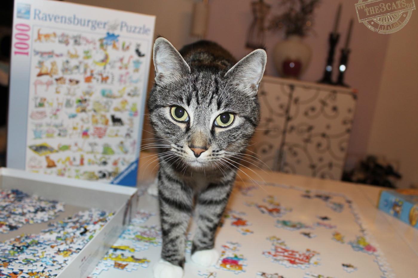 LiJaLuJi: Puzzlecat ist geboren!