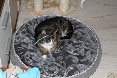 _the3cats_2015_03_19_0668