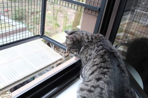 _the3cats_2015_03_19_0688
