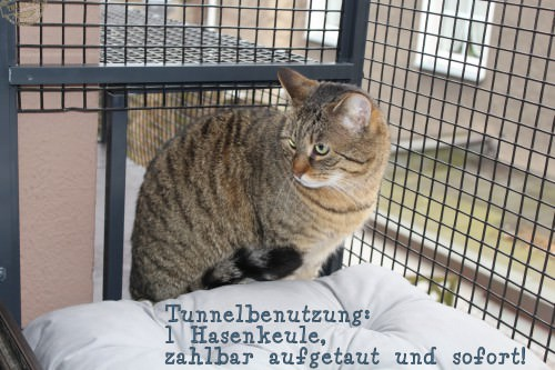 _the3cats_2015_03_19_0968